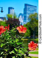 Boston Common park gardens and skyline