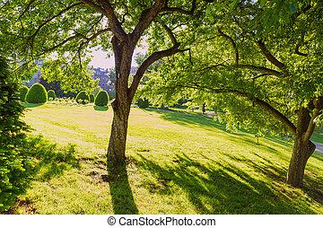 Boston Common public garden tree Massachusetts