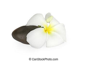 smooth pebble and frangipani flower
