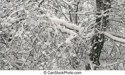 Winter Forest and Snow - Large flakes of snow slowly falling...