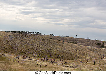 Deforested hillside with remnants of felled trees from a...