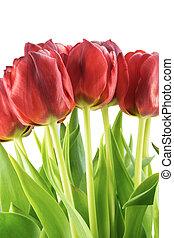 blumengebinde, Tulpen, Blätter, Freigestellt, grün, rotes