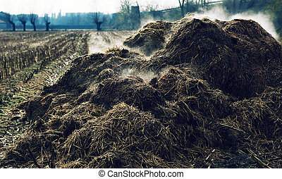 Heap of steaming cow-dung - Heap of cow-dung in the Piedmont...