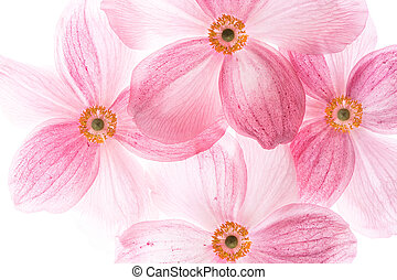 creative macro picture of pink flowers