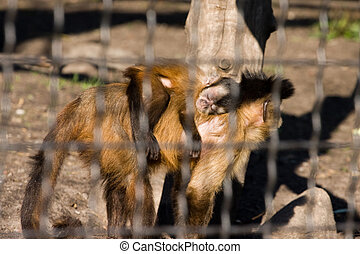 monkey in a zoo