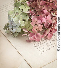 old love letters and garden flowers hydrangea. romantic...