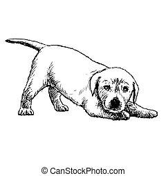 Labrador Retriever - Image of Labrador Retriever puppy hand...