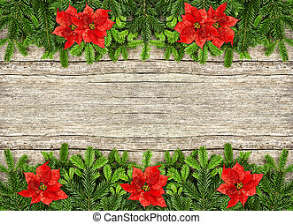fresh christmas tree branch and red poinsettia flowers -...