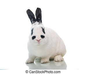 rabbit with raised ear isolated on a white background