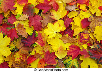 autumn leaves - background of fallen autumn leaves