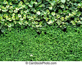leaves wall background
