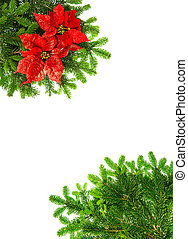 christmas tree branches with red poinsettia flower over...