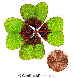 coin and shamrock leaf on white - symbols of luck coin and...