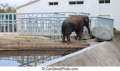 Asian elephant moves in air cage of Zoo autumn