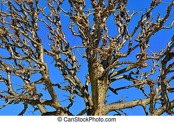 Top of the winter tree without leaves. With sky background.