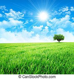 Green like a meadow in the sun - Intense sun breaking...