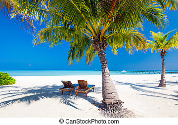 Deck chairs under umrellas and palm trees on a beach - Deck...