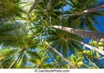 Low angle photo of palm trees on the tropical beach - Low...
