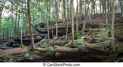Ohio Forest - Hocking Hills State Park in Logan, Ohio is...