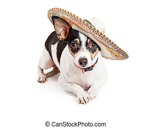 Chihuahua Dog Wearing Big Sombrero - Cute little Chihuahua...