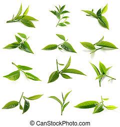 green tea leaf isolated - Green tea leaf isolated on white...