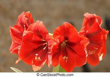 Mirando el entorno - Flores de Lilis