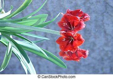 Las Lilis - Flores de Lilis