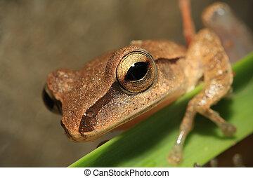 頭, 集中, 人物面部影像逼真, 眼睛, 青蛙