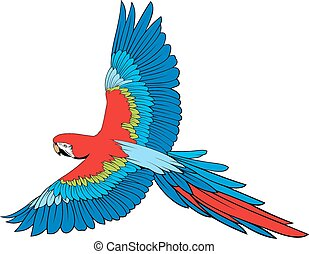 parrot ara  isolated on the white background