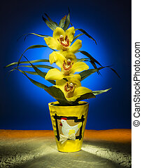 Light Painting - Easter Orchid - An Easter orchid - Studio...