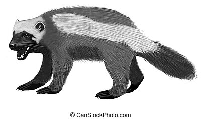 Wolverine Gulo gulo Pencil and Computer Drawing