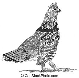 Ruffed Grouse Bonasa umbellus Pencil Drawing