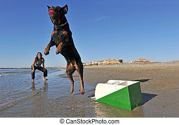 flyball on the beach - a purebred rottweiler and a woman...