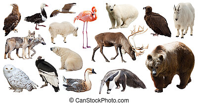 Set of North American animals Isolated on white - Set of...
