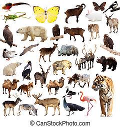 Set of asian animals Isolated on white background