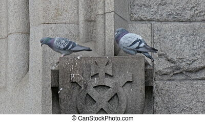 Two blue birds standing on the wall in the Tower of london