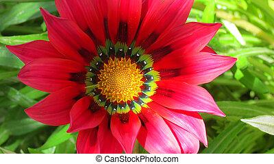 red garden flower