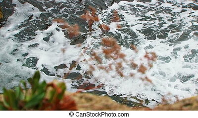 Splashing Waves And Plant At Tarkhankut - Changing focus -...