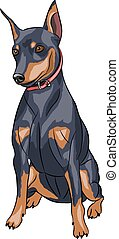 Vector. Miniature pinscher dog. - Dog breed miniature...