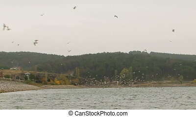 Flock Of Birds Flying Over Lake - In the frame there is a...