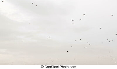 Flock of Birds Flying High In The Sky - This is a shot of...
