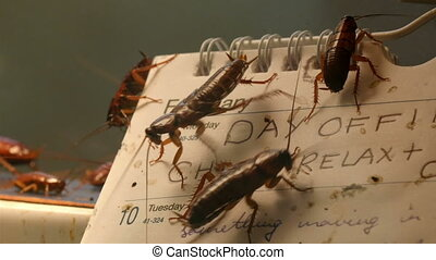 Lots of dirty cockroaches are on a calendar. These...