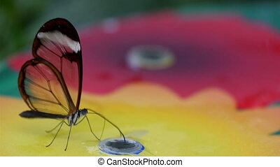 A transparent winged butterfly on top of a colorful object...