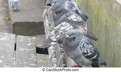 Lots of pigeon birds standing on the bench in the park