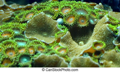 Cup likes green corals in the bed of the ocean. Corals are...