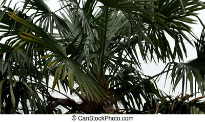 A coco palm tree in the garden
