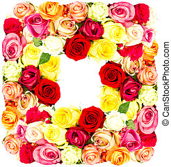 colorful flowers frame  - colorful flowers frame, roses