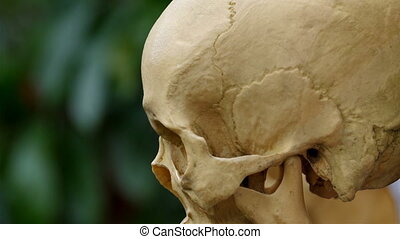 The human skull preserved for study. This is a preserved...