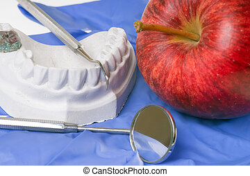 dental hygiene - Apple and model of a human teeth
