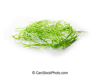 saucer and green grass isolated
